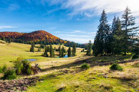 beautiful autumnal landscape in mountains. spruce trees on the hill. small pond in the distance. wonderful warm weather Stock Photo
