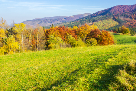 beautiful autumn landscape in mountains. green grass on the meadow. yellow and red foliage on trees. sunny forenoon Stock Photo