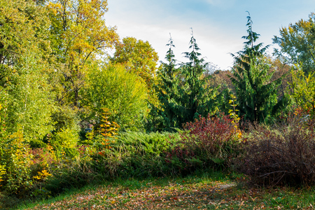 city park scenery with yellow foliage. lovely nature background Stock Photo - 108882877