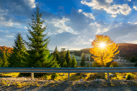 wonderful mornig in mountains. sun beams come through the tree crown in golden foliage. beautiful autumn scenery with lovely sky