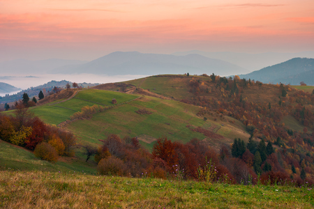 rural area in mountains at dawn. orchard in fall colors on hill. beautiful autumn scenery with cloud inversion in the distant valley