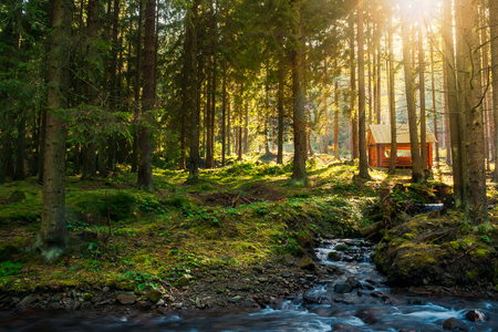 sunny coniferous forest in autumn evening. small brook in foreground and wooden shed in the distance Stock Photo - 109273660