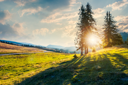 sunburst through trees. beautiful sunset in Apuseni Natural Park. wonderful nature of Romania mountains