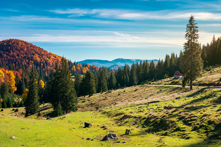 wonderful landscape in mountains. distant mountain in fall colors on a sunny autumn morning. country road on hill disappears in spruce forest Stock Photo - 109273707