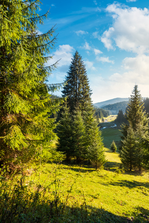 spruce trees on grassy hill above the valley with river in the distance. beautiful early october landscape Фото со стока - 109273708