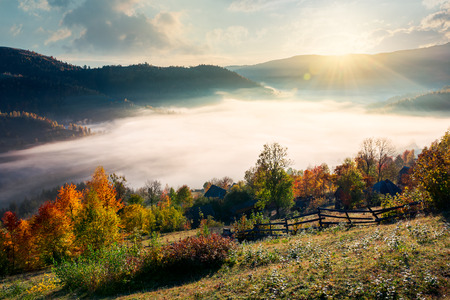 beautiful sunrise in mountain. orchard near the village on hill side. trees in fall foliage. thick fog rise above the valley Stock Photo