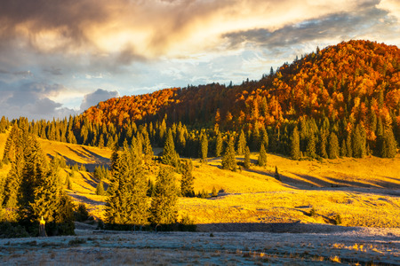 gorgeous sunrise in mountains. forest in fall color. distant mountain lit by rising sun. meadow in golden light Stock Photo