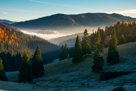gorgeous autumn landscape in mountains. grassy meadow in shade. forest in fall color. fog in the distant valley
