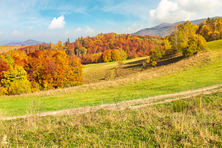lovely autumn scenery of Carpathian mountains. forest in fall colors behind the grassy meadow. mighty ridge in the distance under the gorgeous sky Stock Photo