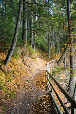 walkway around lake of Synevyr National park in autumn. fallen foliage and wooden fence along the path.