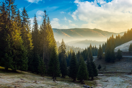 wonderful autumn morning with gorgeous sky above the spruce forest and fog in distant valley. amazing landscape in mountains. Stock Photo - 109273793