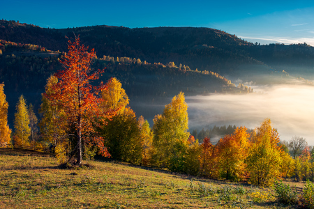 orchard on the hill in village outskirts. gorgeous morning light and fog in autumn Stock Photo - 109273799