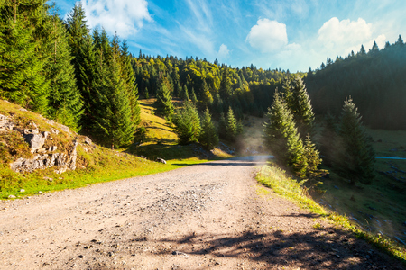 country road through forested area in mountain. beautiful weather in nature at sunrise