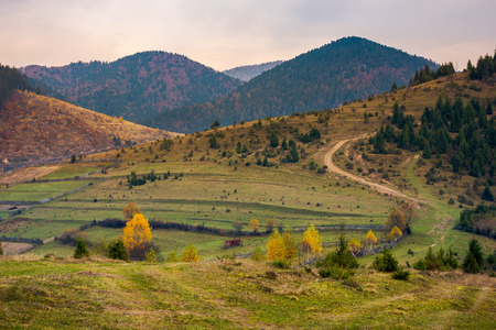autumnal countryside in mountains. boring overcast autumn weather. country road winds uphill in to the forest