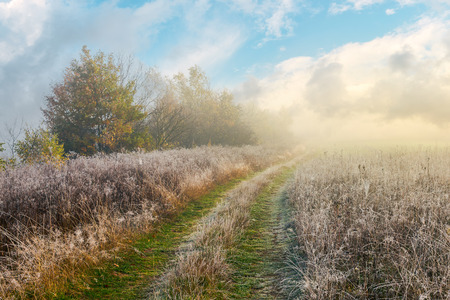 country road uphill through meadow with frozen grass. distant trees in fog. amazing sunny morning weather Stock Photo