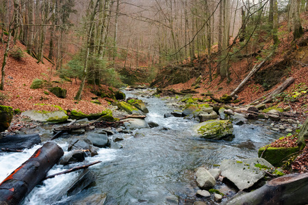 Turichka river in the forest near Lumshory village of TransCarpathia, Ukraine. beautiful autumnal scenery