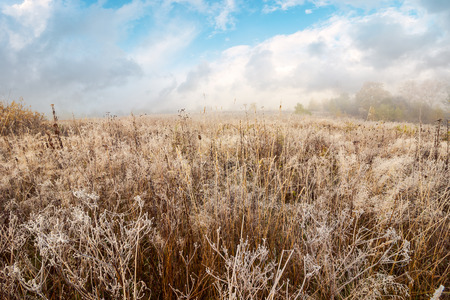 field with frozen dry grass. distant forest in fog under the gorgeous sky Stock Photo