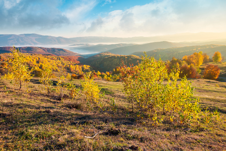 gorgeous autumn sunrise. forest on hill in fall color, fog in valley and beautiful sky over the distant mountain. sunny and warm november morning