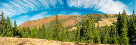 panorama of a mountain ridge under the gorgeous sky with clouds. spruce forest on the nearest hill. beautiful autumn landscape