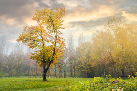 oak tree in yellow foliage on the grassy meadow. mysterious autumn scenery in the foggy park Stock Photo