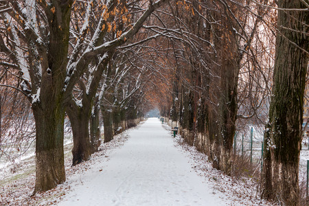 longest european linden alley in winter. walking path covered with snow Stock Photo