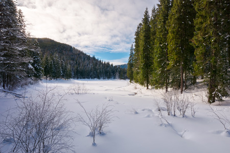 winter forest in mountains. tall spruce trees around the snow covered meadow Stock Photo