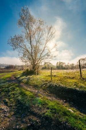 tree by the road in morning light. green grass and plants in hoar. fog rise in to the blue sky in the distance Stock Photo