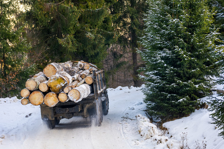 truck transporting wood through forest. dangerous job or illegal cutting concept. road and slope in snow Stock Photo