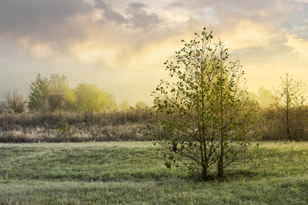 trees on the grassy meadow at sunrise. lovely countryside background of november. foggy and frosty weather Stock Photo