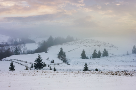 winter countryside on a foggy morning. mysterious scenery with trees on snowy slopes beneath a beautiful cloudy sky Stock Photo
