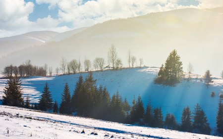 lovely winter scenery in mountains. sun rays light through trees on snowy slope