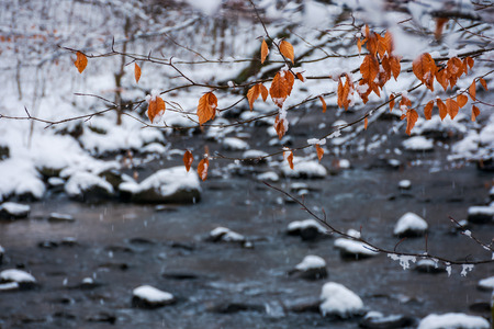 twig above the forest stream in winter. weathered brown foliage covered in snow 스톡 콘텐츠