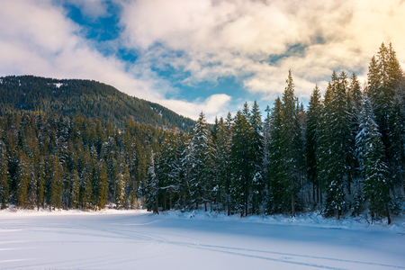beautiful winter scenery in mountains. frozen lake cowered with snow. spruce trees on the shore. wonderful sunny weather
