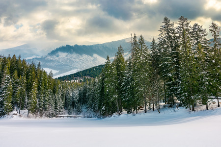 beautiful winter landscape in mountains. spruce forest around the snow covered meadow on a cloudy day. composite imagery Stock Photo