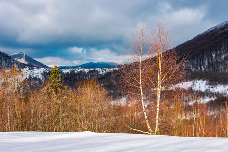 dramatic winter landscape in mountains. leafless birch forest on a snowy slope in sun light. distant mountains in shade of a cloud Stock Photo