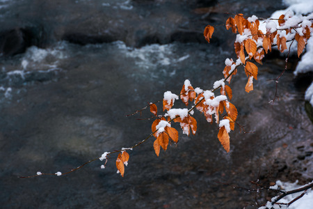 twig above the forest stream in winter. weathered brown foliage covered in snow Stock Photo