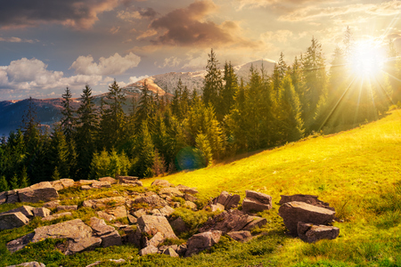 alpine summer landscape composite at sunset in evening light. rock formation near the spruce forest on a grassy hill.  mountain with snowy top in the distance. springtime meets summer concept