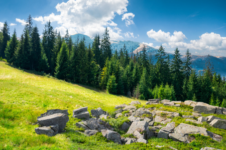 alpine summer landscape composite. rock formation near the spruce forest on a grassy hill.  mountain with snowy top in the distance. calm scenery with fleecy clouds. springtime meets summer concept Stock Photo