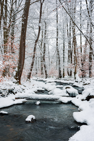 log over the brook in winter forest full of snow. calm nature scenery. brown foliage is present on some trees Stock Photo