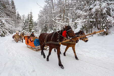National Nature Park Synevir, Ukraine - FEB 11, 2018: winter ride in horse sleigh. winter holidays fun