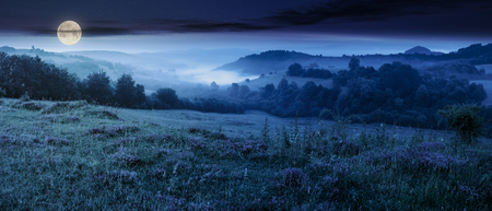 panorama of beautiful foggy night in mountains. purple thyme flowers on the grassy meadow. high mountain in the distance. wonderful landscape Stock Photo
