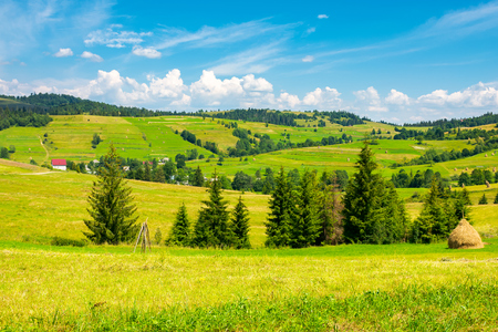 grassy rural hills in mountains. wonderful summer countryside. spruce trees on the green meadow Stock Photo