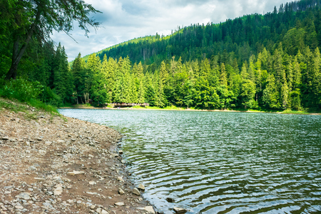 lake among the spruce forest in summer. beautiful scenery in dappled light