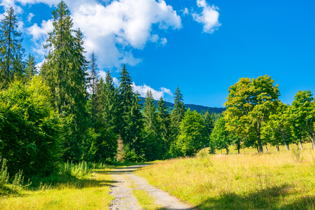 country road among the forest in mountains. lovely summer scenery on a sunny day Stock Photo