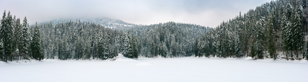 panorama of beautiful winter mountainous landscape. spruce forest around the frozen and snow covered lake. overcast and cold weather
