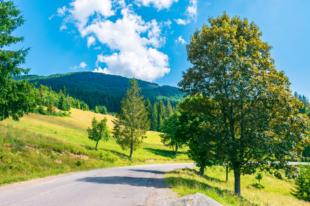trees along the country road in mountains. lovely summer scenery on a sunny day Stock Photo - 113389568