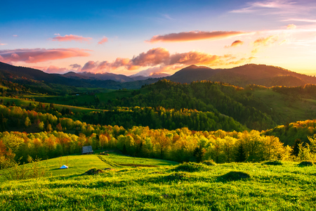 green wonderland at purple sunset. amazing countryside landscape in mountains under the gorgeous sky. woodshed down the hill near the forest. wonderful springtime season