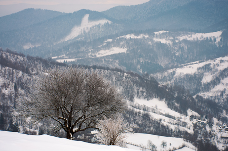 tree in hoarfrost on a snowy slope. beautiful winter landscape in mountains on a gloomy day Stock Photo