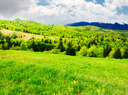 beautiful mountainous countryside in springtime. grassy meadows and forested hill. freshness of nature concept Stock Photo