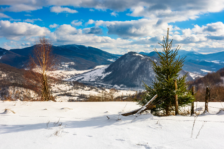 small spruce tree near the wooden fence on the edge of a snowy slope. beautiful winter landscape on a sunny with clouds on a blue sky Stock Photo